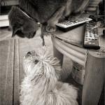 Kedvelt háziállataink: kutyák és macskák