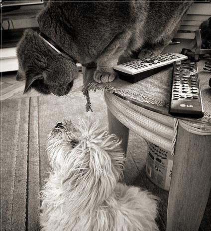 Macska halászati randi