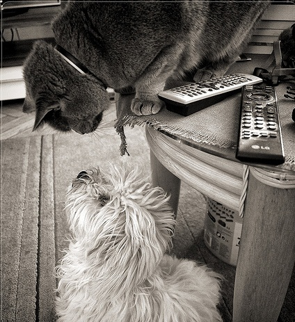 a571808d830a Kedvenc háziállatok: kutyák és macskák