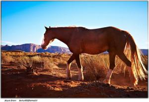 A lovak fontos szerepet játszottak az emberiség fejlődésében