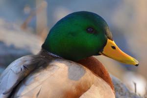 A világon számtalan madárfaj létezik