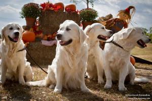 Igazi családi kutyák