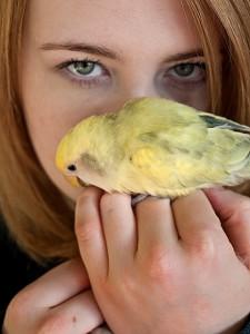 A papagájok számára elfoglaltságot és változatosságot kell biztosítani.