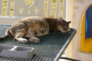 A vemhes macska nyugodtabb