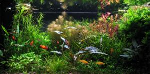 Kellemes látvány a szép akvárium