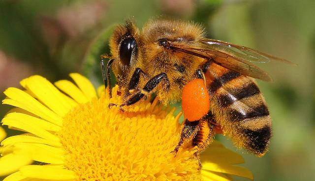 A méhpempő áldásos erejét a méhkirálynő is megtapasztalja