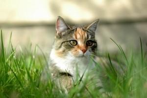 Állatwebshop - állatfelszerelés