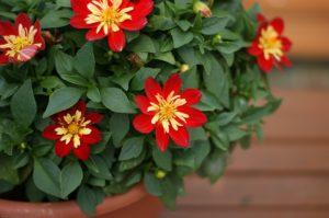különleges cserepes virágok